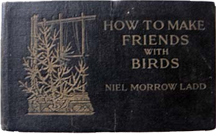 How to Make Friends With Birds
