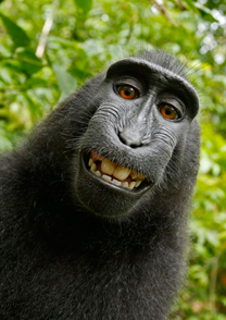 Macaque Self-Portrait