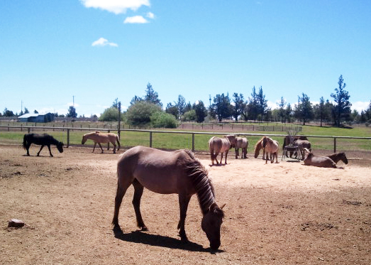 "The ""Tarpan"" herd, Equine Outreach"