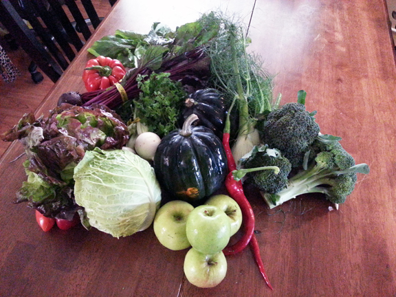 CSA Basket #21: October 25, 2012